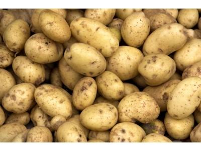 Organik Sarı Patates 1 kg